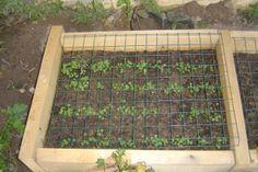 Sebze bahçesi hazırlama - agaclar.net