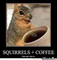 Squirrel Plus Happy Coffee Equals. Happy Squirrel More coffee graphics, caroons and pics via Mind Morsel. Funny Animal Pictures, Funny Animals, Cute Animals, Squirrel Pictures, Smiling Animals, Animal Funnies, Animal Memes, Tierischer Humor, Adhd Humor