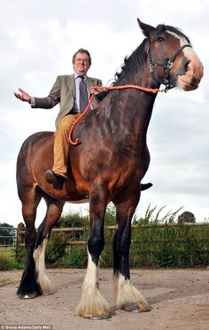 Take a ride on Britain's highest horse.He's 10ft tall, weighs a ton and is so big no saddle fits him.