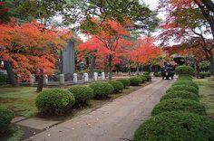 秋の豪徳寺 世田谷区豪徳寺(Gotokuji in Setagaya-ku) | by setagayatoieba