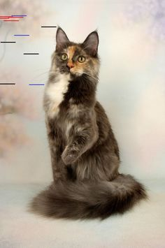 16 Pictures Of Animals Holding Hands Very interesting post: TOP 54 Funny Cats Pictures. Also dompiсt.сom lot of interesting things on Funny Animals, Funny Cat. Funny Cats, Funny Animals, Cute Animals, Funny Cat Pictures, Animal Pictures, Long Cat, Cute Baby Cats, Cat Years, Maine Coon Kittens