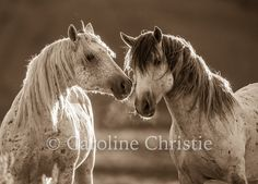 Wild Horses of the Sand Wash Basin, Colorado - 'The Touch II' by CarolineChristieArt on Etsy