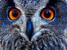 Wings.  Love the blue beak!