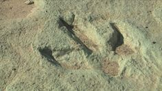 Hiker finds 125-million-year-old dino tracks
