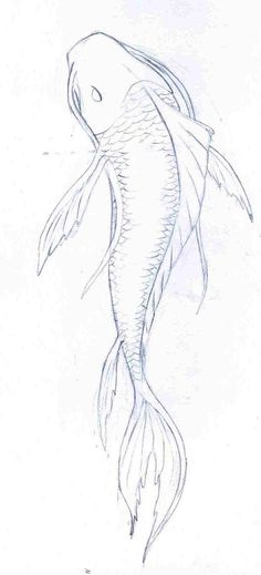 Resultado de imagen para koi fish drawings in pencil