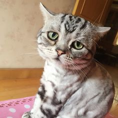 Luhu, the perpetually worried cat