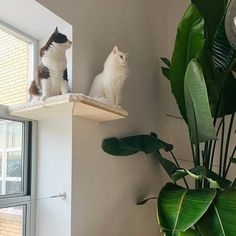 (paid link) Top 10 Floating Cat Shelves and Wall Perches | How to Spoil Your