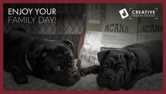 Enjoy the day with your Family! Family Day, Duke, Creative Design, David, Studio, Blog, Studios, Blogging, Peacocks
