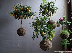 Kokedamas y jardin de cuerdas8