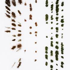 Gerco de Ruijter / Baumschule / The Netherlands 2008 / 2010 #002 / Tree farm in winter.