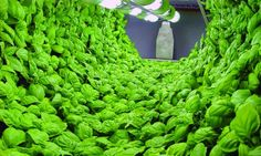 Producing food indoors also means that consumers are shielded from disruptions in the food supply caused by natural disasters and that farml...