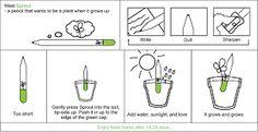 I 5 Step della penna Sprout, come creare una nuova vita da una vecchia linfa.