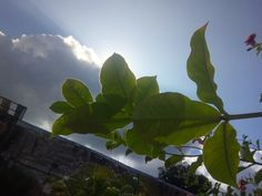#sun #flower #holidays #sky #bluesky #fondosdepantalla #paisajes #paisajesbonitos #inspiracion #verde #azul #sol #nubes #cielo #green #naturaleza #nature