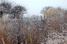 Piet Oudolf  winter interest