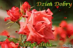 Good Morning, dzień dobry Music Bands, Good Morning, Rose, Beautiful, Pink, Bonjour, Roses, Buongiorno, Pink Roses