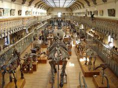 musee-histoire-naturelle-paris