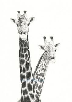 Giraffe Drawing Two Giraffes Fine Art Pencil by ArtStuffByJess