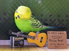 guitar? dont ask me where i got if from! ~ D: