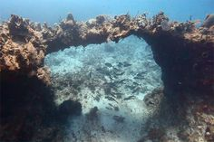 Scuba Divers in the Cayman Islands enjoy one of mother natures most spectacular under water archways..