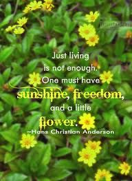 Sunshine Flower Quotes