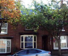 107 Peveril Road, Sheffield, S11 7AQ - Hunters Bar - Sheffield Student Property t/a Salis Properties Ltd  http://www.sheffieldstudentproperty.co.uk/107-peveril-road-sheffield-s11-7aq-i43.html