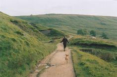 Imagen de dog, nature, and green