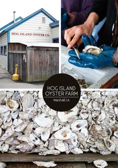 www.editionlocal.com >> Hog Island Oyster Farm >> Marin County, California.