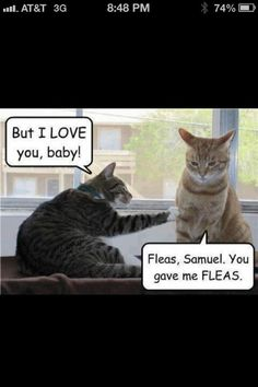 Fleas!!!! #relationships