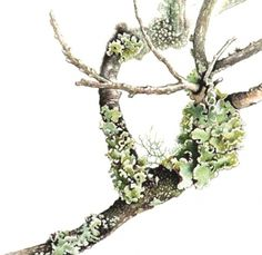 botanical illustration ferns and moss - Google Search