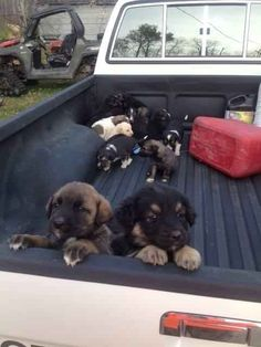 """The """"cold and flea-ridden"""" pups were then taken to the local humane society."""