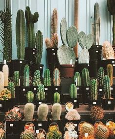 Cacti - All the shapes and sizes.