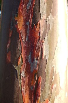 Tree Bark by jungle mama - Susan Ford Collins