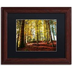 Trademark Fine Art The Autumn Bench Canvas Art by Philippe Sainte-Laudy Black Matte, Wood Frame, Size: 16 x 20, Brown