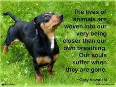 Quote | Gary Kowalski: The lives of animals are woven into our very being closer than our own breathing. Our souls suffer when they are gone. #lossofdog #quotes #grief