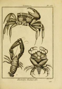 Tableau encyclopédique et méthodique des trois règnes de la nature, vingt-quatrième partie : - Biodiversity Heritage Library