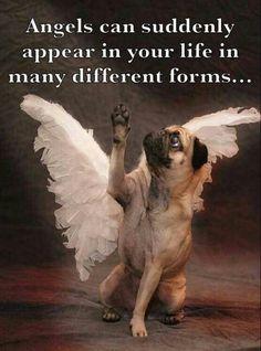 Pugs are little angels #pugs