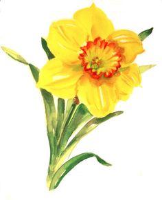 Yellow and orange watercolor daffodil