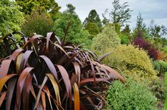 Phormium with dark and broad leaves contrasting to the light and small leaves behind it | Flickr - Photo Sharing!