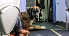 How to Fly with a Dog - Tips on Traveling with your Emotional