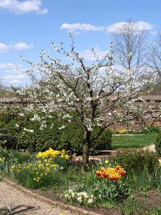 flowering tree in the garden courtyard at Mt. Vernon