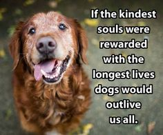 So true! Dogs have the sweetest souls...