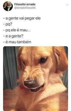 17 ideas for memes sad dog Top Memes, Best Memes, Funny Memes, Pet Dogs, Dog Cat, Funny Animals, Cute Animals, Animal Jokes, Otaku Meme
