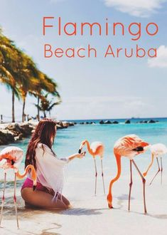 Feeding Flamingos in Aruba, pigs in Bahamas, penguins in South Africa!!!!
