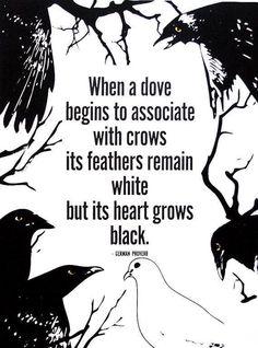 إن عاشرت الحمامة غرباناً فإن ريشها سيظل أبيض اللون ولكن قلبها سيصبح أسوداً.#غرد_بصورة  _ مثل ألماني
