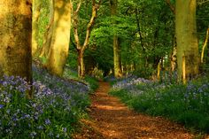 Most Beautiful Images of Nature | Beautiful Skin » path-in-the-forest-beautiful-beauty-big-trees ...