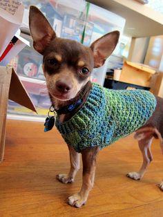Ravelry: lindamade's Freddie's Dog Sweater, no pattern, tutorial description, #crochet,