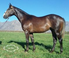 "Boland Stud's ""Masterful colt"" a National Sale standout Horse Racing, Race Horses, Twist Of Fate, The Gr, Horses For Sale, Two By Two, Handsome, Absolutely Stunning, Animals"