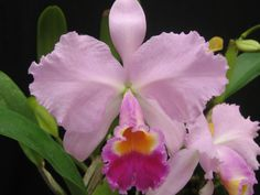 Planting Flowers, Orchids, Roots, Mayo, Birds, Nature, Shop, Plant, Ornamental Plants