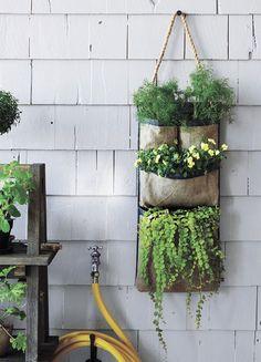 Tự làm vườn treo trồng rau trong bếp - 15
