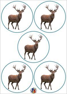 Moose Art, Clip Art, Education, School, Baby, Decor, Animals Of The Rainforest, Xmas, Studying